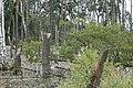 Mueritz Sumpf im Wald 1.JPG