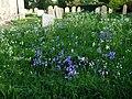 Mundham Churchyard - geograph.org.uk - 1038283.jpg