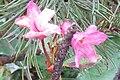 Mystery plant (Heiterwanger See) (15618971490).jpg