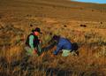NRCSMT01030 - Montana (4909)(NRCS Photo Gallery).tif