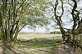 NSG-Boberger-Niederung-Bäume-am-westlichen-Ende-des-Segel Flughafens.jpg