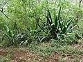 Nairobi Arboretum Park 14.JPG