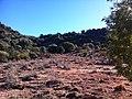 Naledi, South Africa - panoramio (3).jpg
