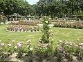 Nancy - Parc de la Pépinière - Roseraie.jpg