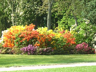 Der Volksgarten 330px-Nancy_P%C3%A9pini%C3%A8re_Rhododendron
