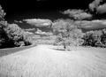 Natchez Trace Parkway, Mississippi LCCN2010630792.tif
