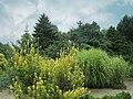 National Arboretum in July (22946344883).jpg