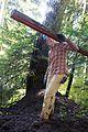 National Public Lands Day 2014 at Mount Rainier National Park (056), Narada.jpg