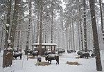 National park Orlovskoe polesje.jpg