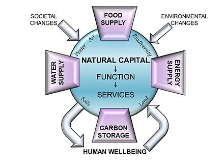 The many components of natural capital can be viewed as providing essential goods and ecosystem services which underpin some of our key global issues, such as food and water supply, minimising climate change and meeting energy needs. Natural Capital graphic.jpg