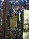 Natural History Museum (22).jpg