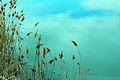 Nature 327-7 (5565810391).jpg