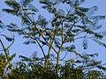 Natureza tucanos - panoramio.jpg