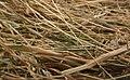 Needle in haystack6.jpg