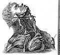 Nerves of the neck, 1803 Wellcome L0001816.jpg