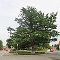 Neukloster Hauptstraße Schwedeneiche.jpg
