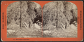 New bridge to Luna Island, by Barker, George, 1844-1894 2.png