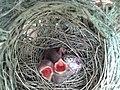 Nightangel Bird01.jpg