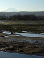 Nisqually National Wildlife Refuge 003.jpg