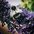 Noordwijk - Bee.jpg