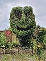 North Parade topiary.jpg