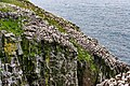 Northern Gannets St Mary Cape Newfoundland (26493210377).jpg