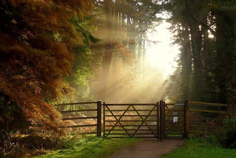 November morning, Forest of Dean, 4.jpg