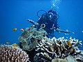 Ocean Tribe Scuba Diving Havelock.jpg