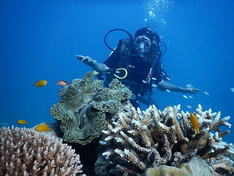 File:Ocean Tribe Scuba Diving Havelock.jpg