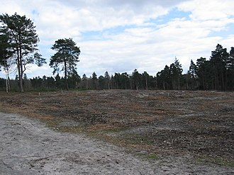 Ockham, Surrey - Ockham and Wisley Commons support rare species in their nationally rare soil type, acid, naturally wet sandy heath and bog soil.