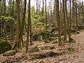 Oldřichovská vrchovina, sever, bučina 10.jpg