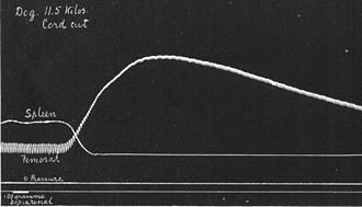 History of catecholamine research - Experiment by Oliver und Schäfer: an adrenal extract increases the blood pressure and contracts the spleen.