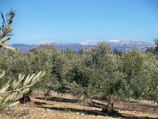 """""""Olive Trees with the Alpilles in the Background"""" by Vincent van Gogh"""