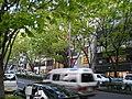 Omotesando - panoramio - kcomiida (7).jpg