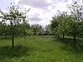 Orchard on edge of Stan Moor - geograph.org.uk - 442535.jpg