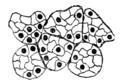 Origin of Vertebrates Fig 089.png