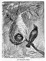 Oriole Nest.jpg