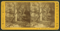 Ossipee Falls, Ossipee, N.H, by Pease, N. W. (Nathan W.), 1836-1918.png
