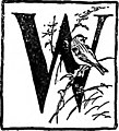 Our winter birds, how to know and how to attract them (1918) (14749201801).jpg