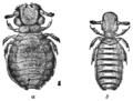 PSM V76 D220 Mallophaga lice.png
