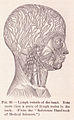 Page 127 Lymph Vessels of the Head.jpg