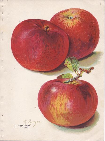 File:Page 7 apple - Baxter, Stark.tiff
