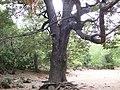 Paisaje de la septima region de chile( MOLINA) - panoramio.jpg