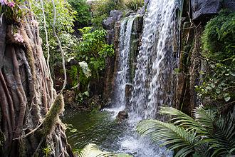 "Palma Aquarium - The ""Jungle"""