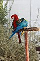 Paphos Zoo, Cyprus - panoramio (32).jpg