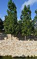 Parc de Capçalera de València, mur i arbres.JPG