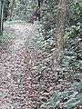 Parmadan Forest 14.jpg