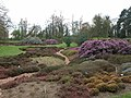 Part of the National Heather collection, RHS Wisley - geograph.org.uk - 2404.jpg