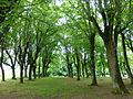 Paysage autour de Vézelay (4).jpg