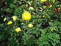 Penang Botanic Gardens (39).JPG